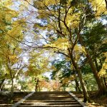 [:ja]艶麗の手向山八幡宮[:en]Tamukeyama Hachiman-gu Shrine[:]