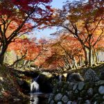 [:ja]秋麗奈良公園[:en]Nara Park[:]