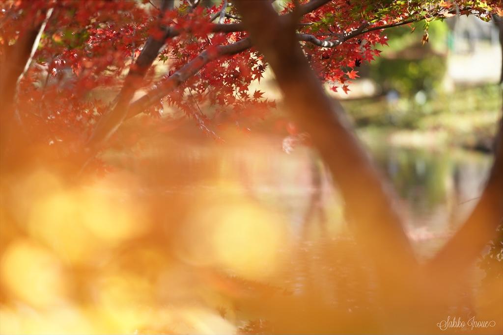 kyoto botanical park