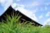 元興寺の萩